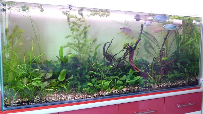 Грунт для аквариума с живыми растениями своими руками 70