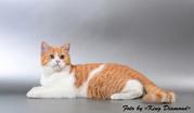 Биколорный котик + видео