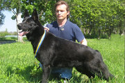 Черные немецкие овчарки - международный питомник