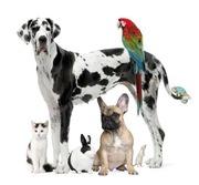 Veterinariya.info ветеринарная аптека