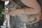 котята отдам в хорошие руки