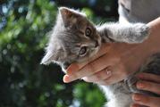 котята отдам бесплатно в хорошие руки