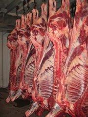 Полутуши свинина/говядина от 158/200 руб.